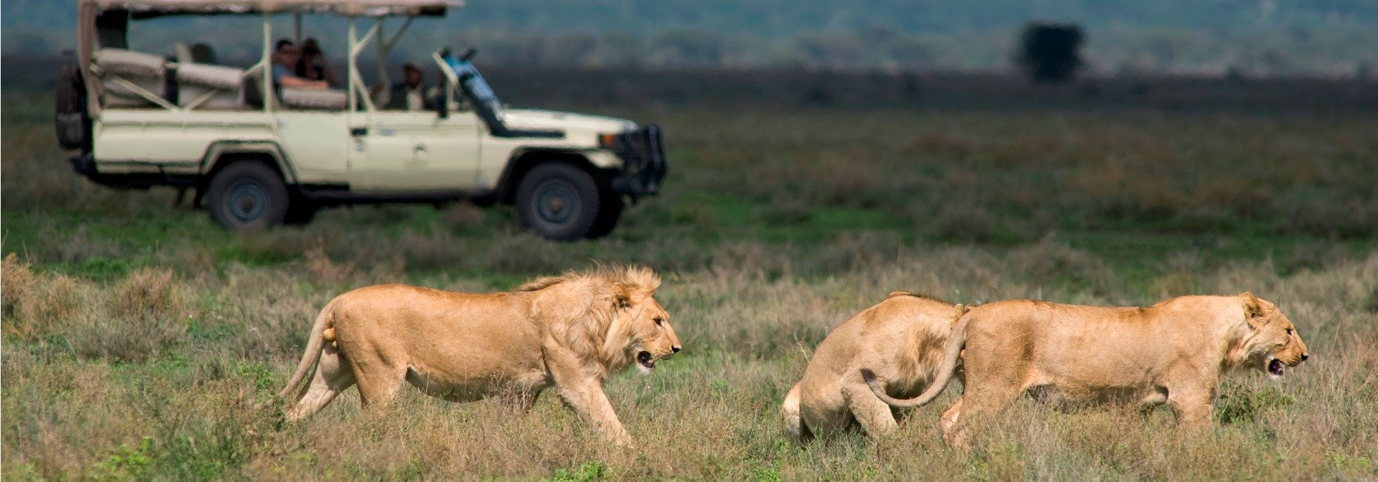 Kusini Tanzania Game Drives