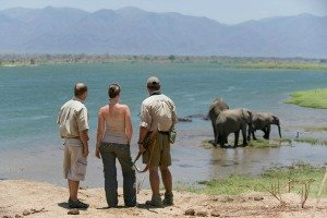 Walking safari at Ruckomechi, Mana Pools