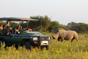 Marataba Safari Lodge, South Africa, game drive