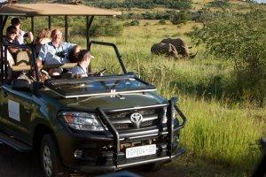 Safari at Pilanesberg Game Reserve
